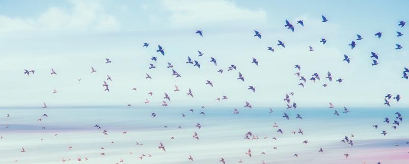 summer-birds